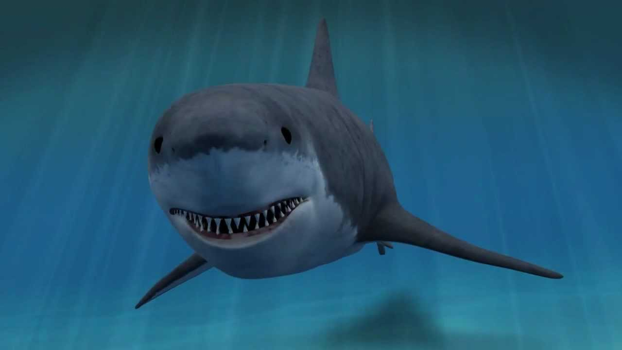 Moving clipart shark Clip Art 3D Greate Shark