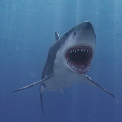 Moving clipart shark Art Free MODEL Animated Free