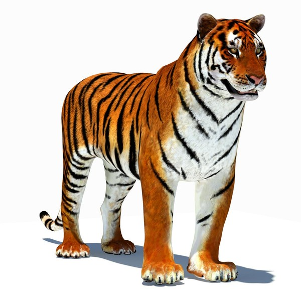 Moving clipart tiger #11