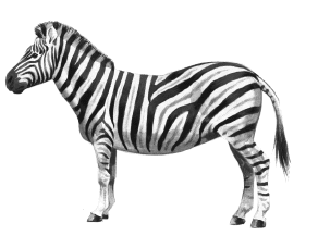 Moving clipart zebra Animal drawing Free Clipart and