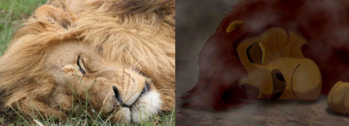 Mufasa clipart real life Mufasa's and Lion lifeless The