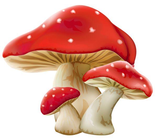 Mushroom clipart alice and wonderland Best mushrooms PNG Picture Mushrooms