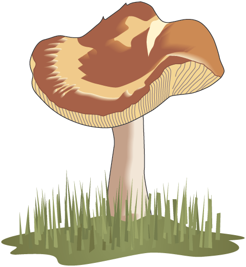 Mushroom clipart decomposer Television) Public (Science Food Trek:
