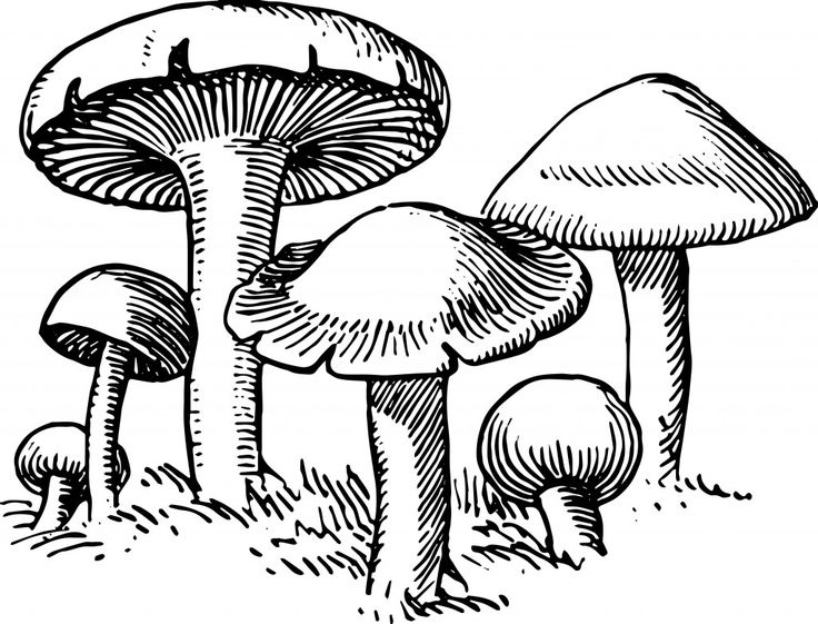 Mushroom clipart decomposer On images decomposer ArtMushrooms ideas