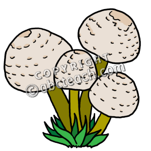 Mushroom clipart decomposer Decomposers Clip Clipart Art P
