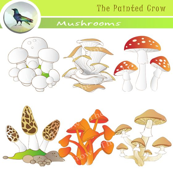 Mushroom clipart decomposer Source realistic Decomposers mushroo Clipart