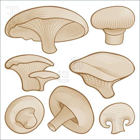 Mushroom clipart mushroom slice #11