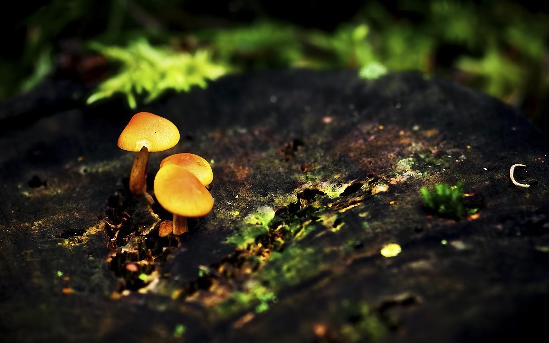 Mushroom clipart wallpaper  Mushroom Clipart Mushroom Clipart