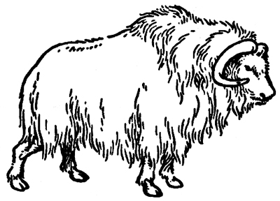 Muskox clipart Clipart Ox Info Free Clipart