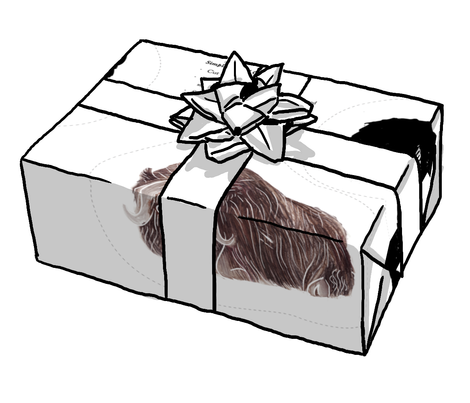 Muskox clipart box #3