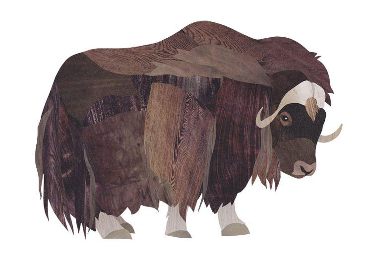 Muskox clipart treasure Ox illustrator Jonathan Collage Muskox