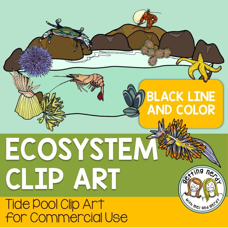 Mussel clipart capable Images on best tide Pinterest