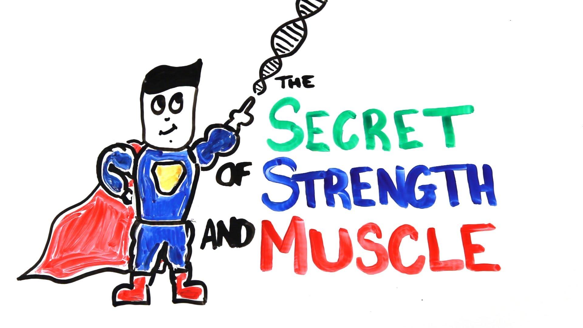 Mussel clipart muscular strength #1
