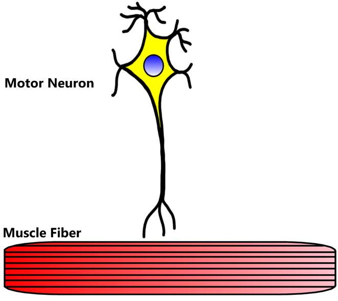 Mussel clipart neuron #4