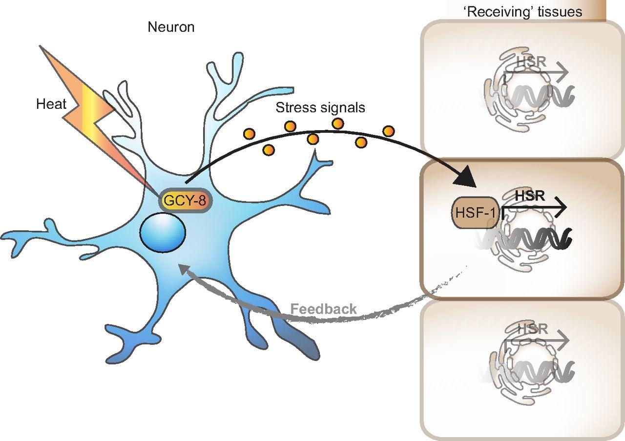 Mussel clipart neuron #5