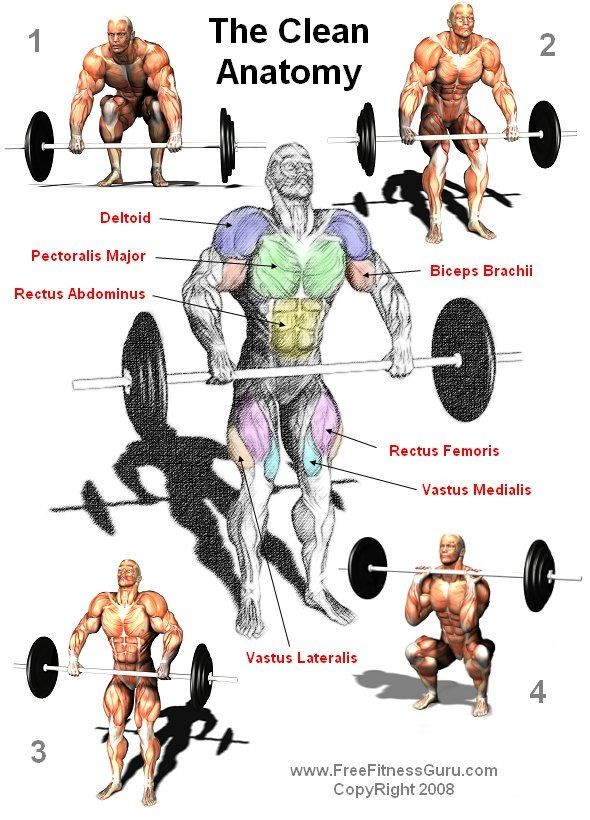Mussel clipart strong bone Olympic Clean 536 best ANATOMY