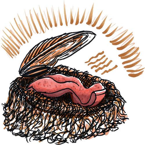 Mussel clipart strength weakness The Artist
