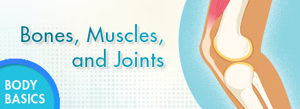 Mussel clipart strong bone Bones Muscles Joints and Joints