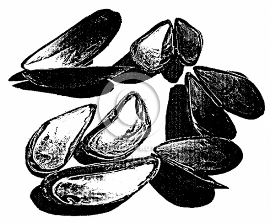 Mussels clipart happy clam  Mussels art clip