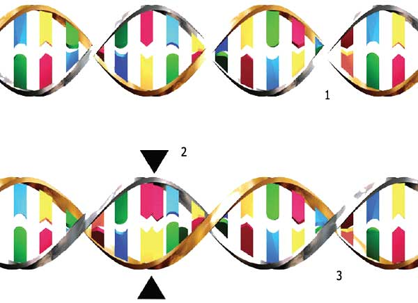 Mutant clipart genetic engineering How Engineering Human a future?