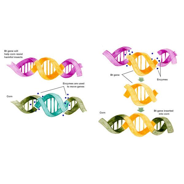 Mutant clipart genetic engineering GM Could Genetic is insert