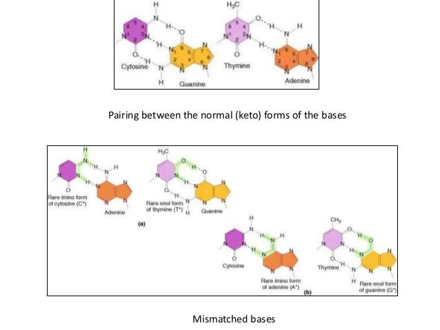 Mutant clipart spontaneous Mechanism spontaneous Molecular of 7