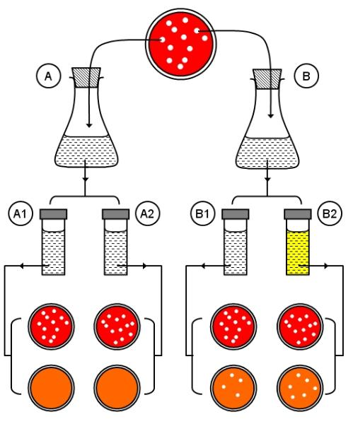 Mutant clipart spontaneous Experiment of mutation Anomalous summary