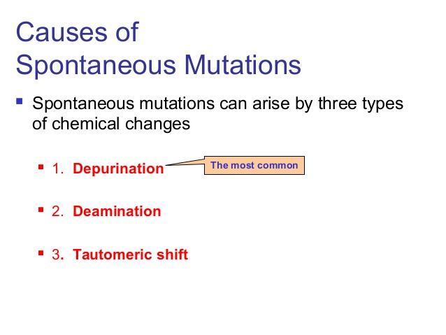 Mutant clipart spontaneous Lecture gene depurinationFigure ppt 4