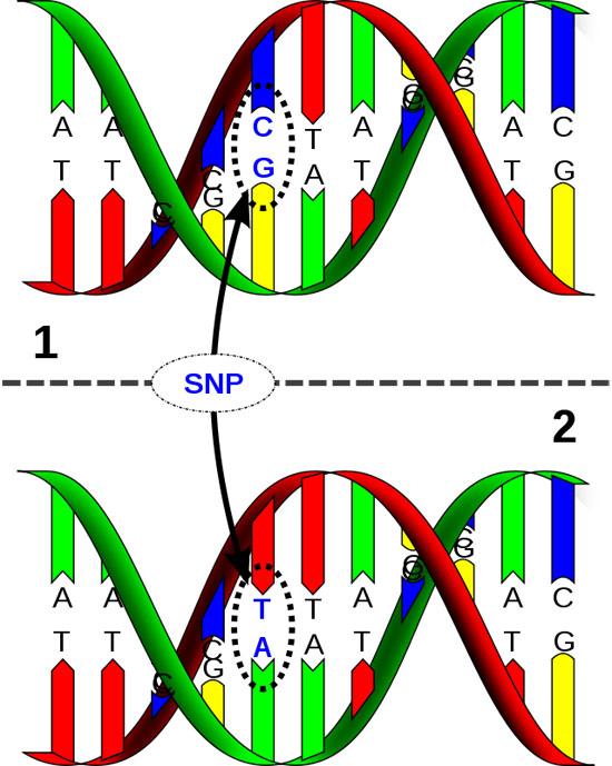 Mutant clipart spontaneous Can Genetics: lead Single mental