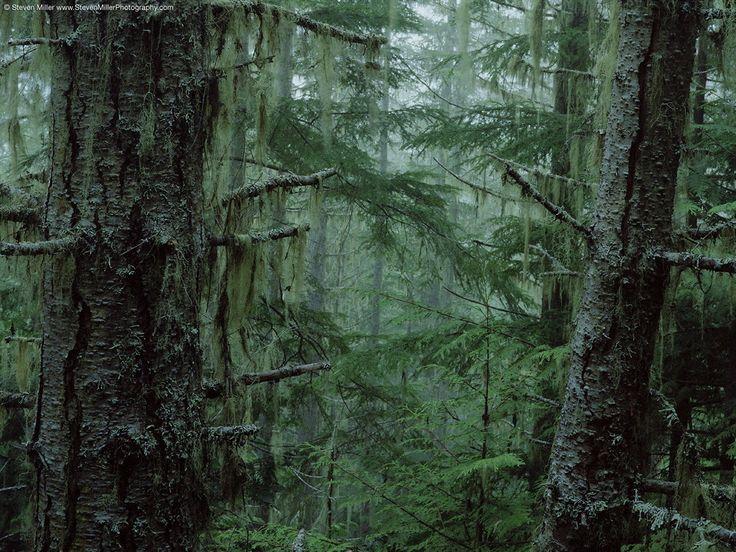 National Park clipart dark forest #4