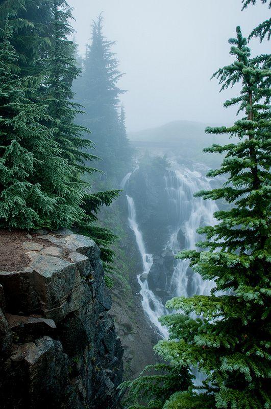 National Park clipart dark forest #9