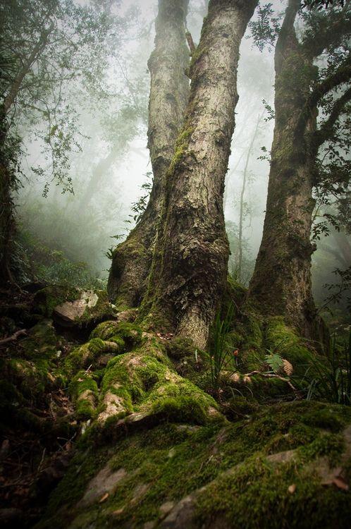 National Park clipart dark forest #7