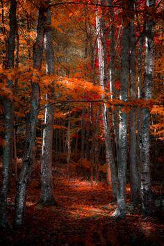 National Park clipart dark forest #13