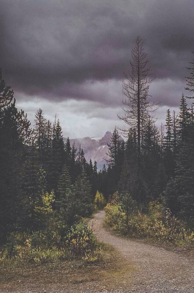 National Park clipart dark forest #14