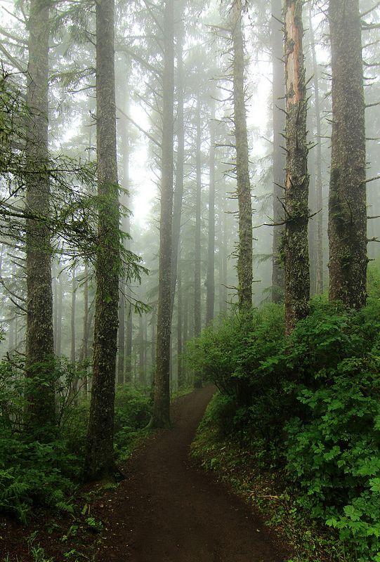 National Park clipart dark forest #6