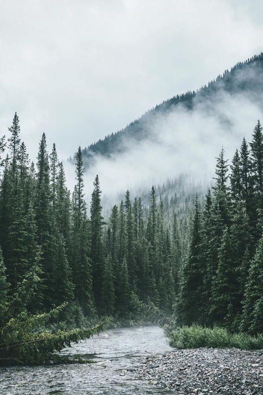 National Park clipart dark forest #8