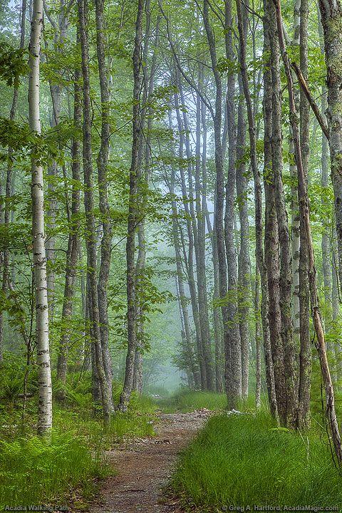 National Park clipart dark forest #5