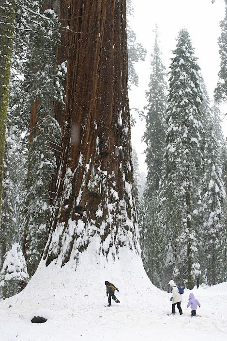 National Park clipart winter forest  Visiting for about Tips