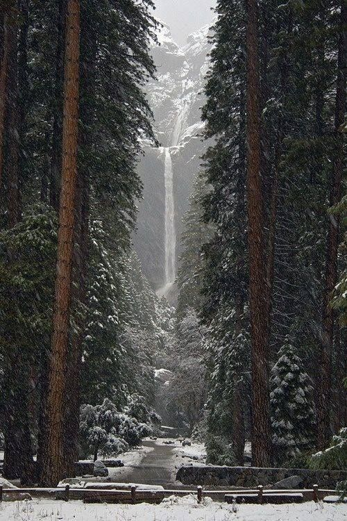 National Park clipart winter forest About images best Pinterest National