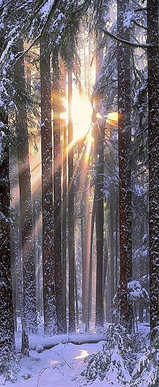 National Park clipart winter forest Winter of Park best National