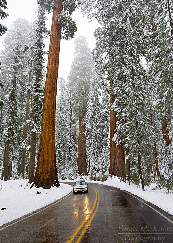 National Park clipart winter forest Park national Sequoia  National