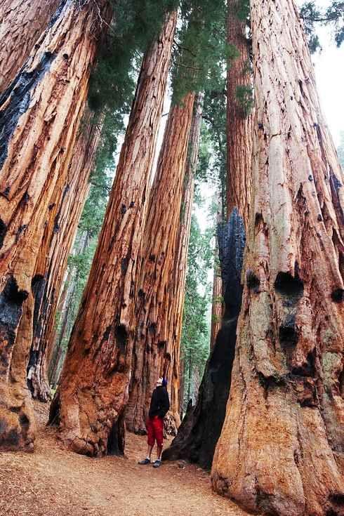 National Park clipart woods #2