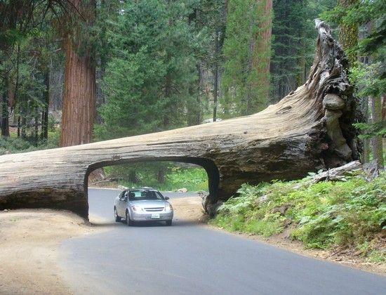 National Park clipart woods #13