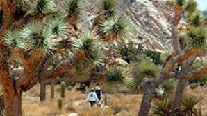 National Park clipart woods #10