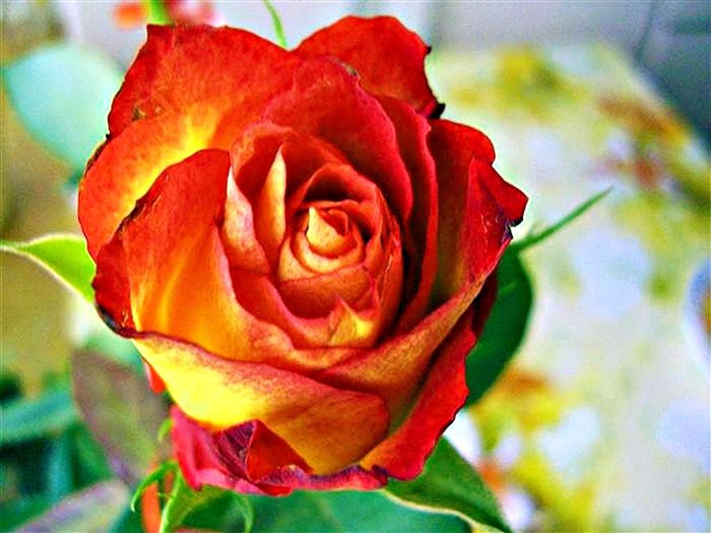 Orange Flower clipart bright flower Enthusiasm Flower 1024x768 Clipart Orange