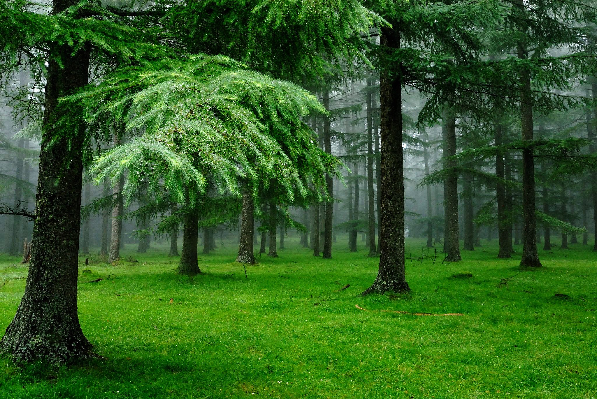 Wood clipart green forest Trees Forest Green Free Free