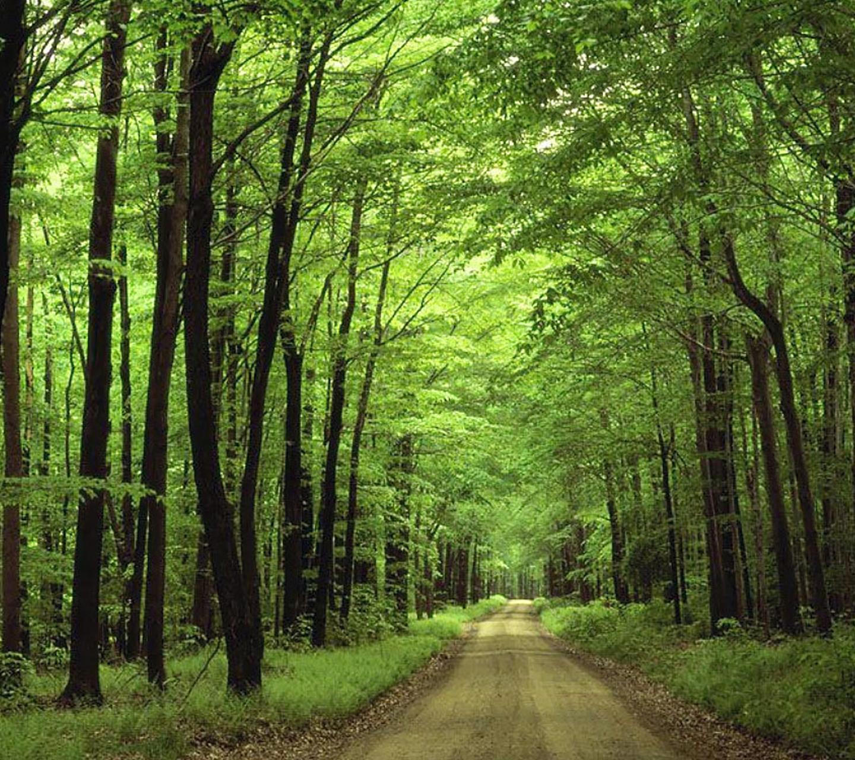 National Park clipart dark forest #10