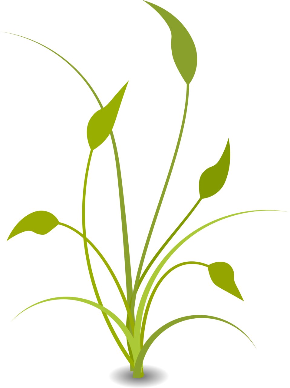 Plant clipart transparent Art plants Download Free Art