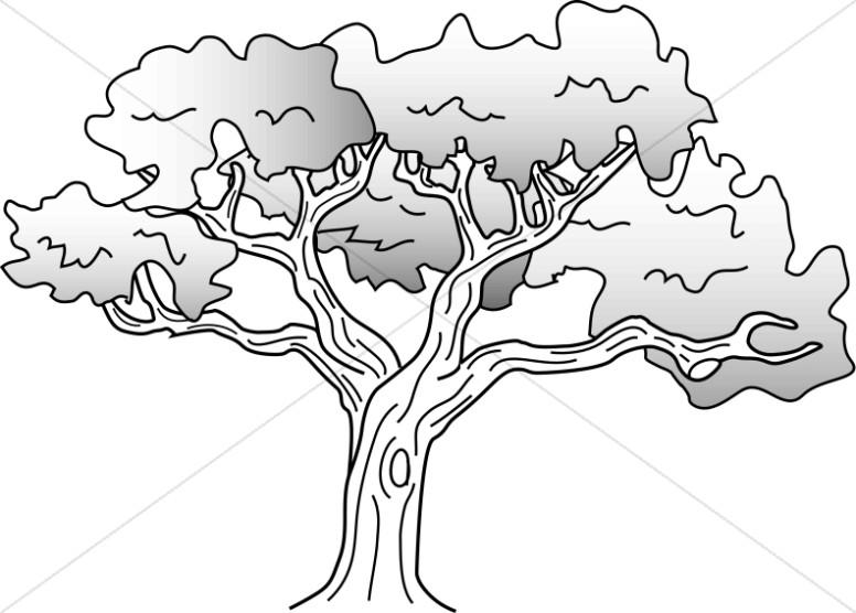 Drawing Oak Simple Drawing Oak