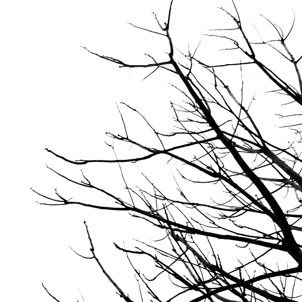 Branch clipart black and white Tree #branches Panda Info Clipart